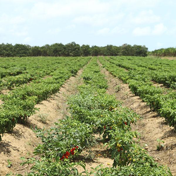 farm1-3